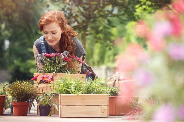 Gdzie kupić kwiaty do ogrodu?